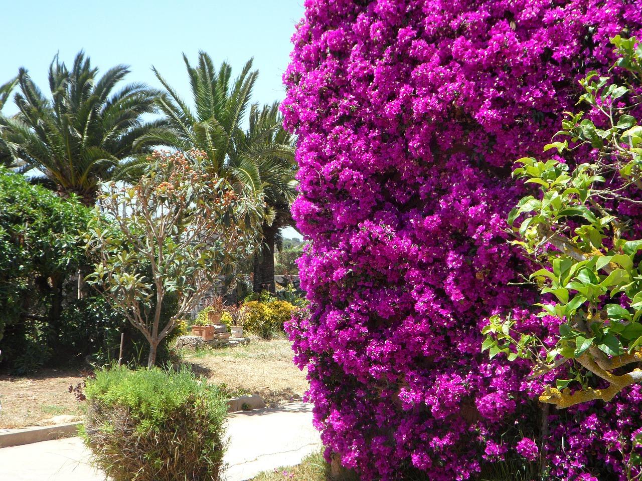 fleur méditerranéenne