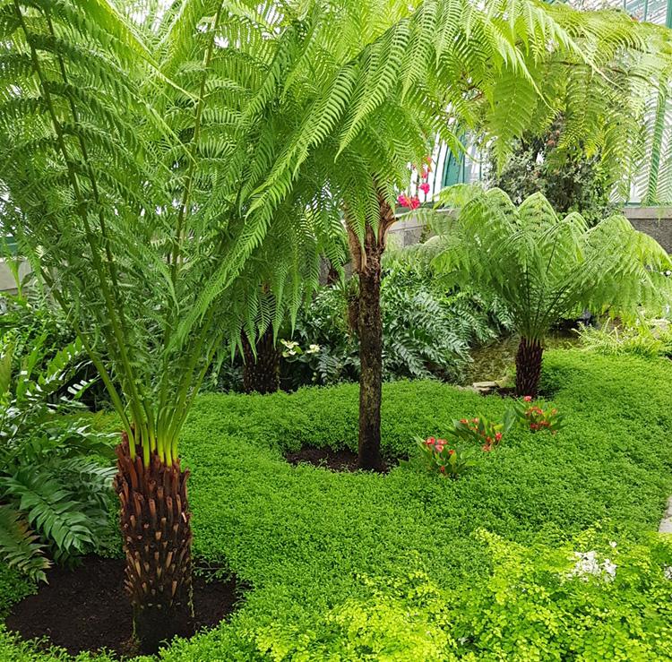 jardin remarquable exotisme