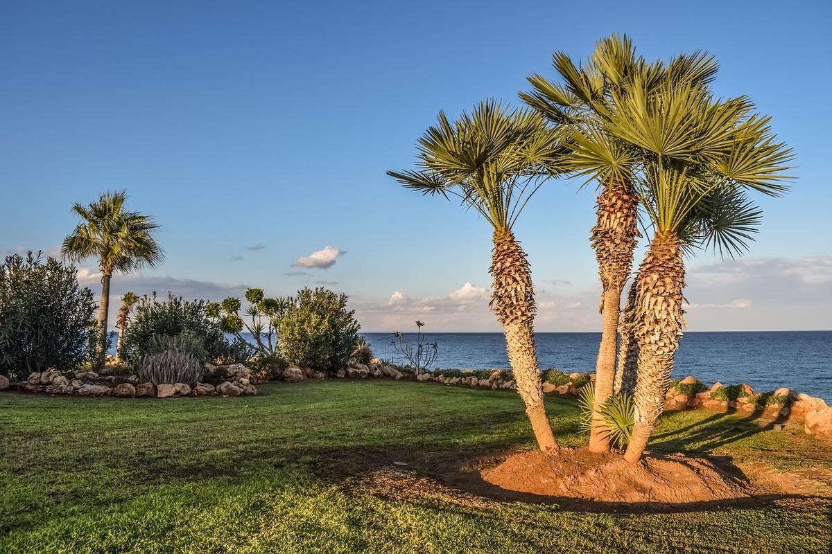 Palmier Jardin Bord de mer